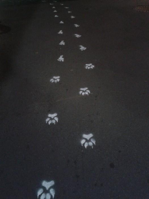 Pas Loups Garous - FLIP